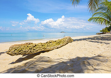 Palm tree trunk at beach in Penang, Malaysia - Palm tree...