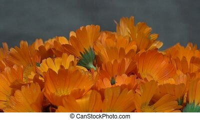 marigold calendula officinalis herb flower blooms. turntable...