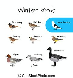 Set of Vector colorful winter bird icons.