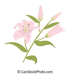 Vector illustration of beautiful lily flower.