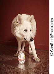 policía, rastro, proceso, olor, perro, identificación,...