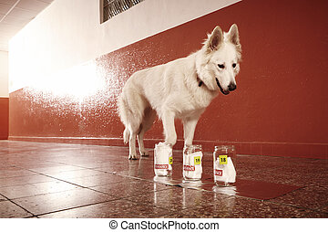 policía, rastro, olor, perro, identificación, ubicación,...