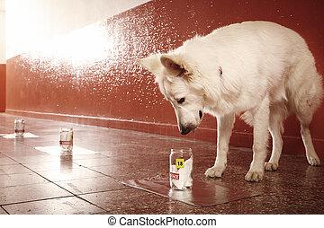 policía, rastro, positivo, olor, perro, identificación,...