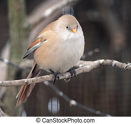 Small cute bird is sitting at branch