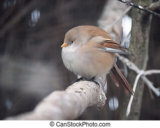 Small cute bird sitting at the branch