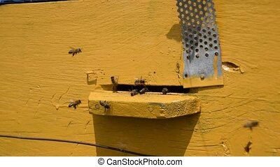 Bees fly in the tray. Entrance to the hive. House for bees.