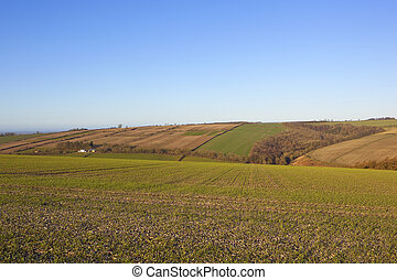 winter agricultural landscape - winter wheat in chalky soil...