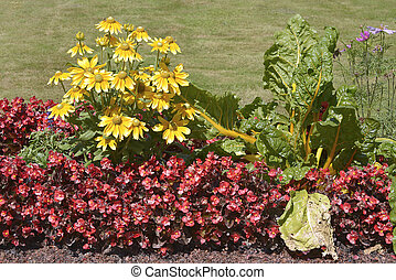 Flowerbed of coneflowers and begonias - Flowerbed of yellow...