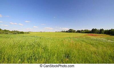 summer meadow, blue sky