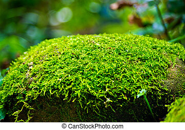 Green moss on stone in forest - gray stones of an ancient...