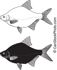 Bream high - Black and white vector illustration Freshwater...