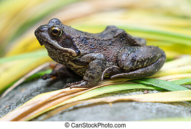 Toad sits on green leaves
