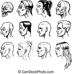 Forms of a male and female face - Set of different male and...