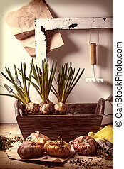 Garden tools and flower bulbs - Muskari sprouts and tulip...