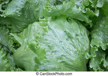 Healthy fresh vegetable ingredients displayed, stock photo