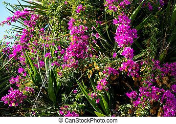 Mediterranean flowering plants. Close up.