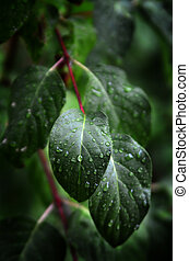 Leaves and Plants in Rainstorm - Rainstorm and rain drops on...