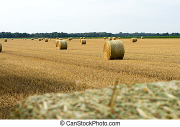 straw bales - Many straw bales in a field