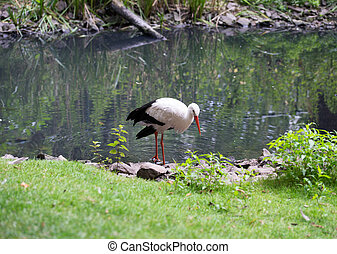 Stork in the nature