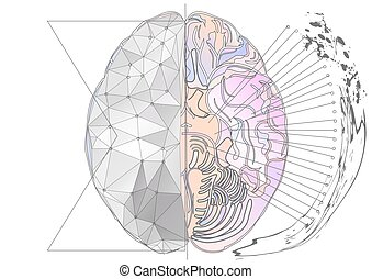 cerebral hemisphere. abstract brain with multicolor line and...