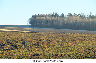 field and forest - landscape with ploughed field and bare...