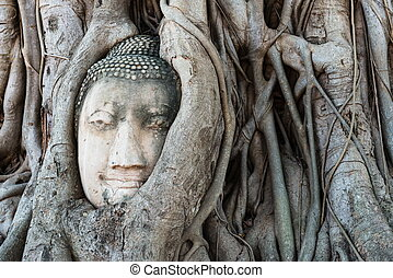Head of Buddha statue in the tree roots at Wat Mahathat...