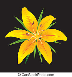 Lilium - Orange tiger lily with green leaves on black...