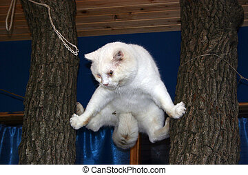 Cat on a tree.  -  The dog chased a cat up a tree.