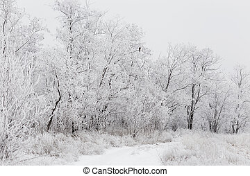 Winter View of trees covered with snow
