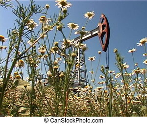 oil field - extraction of oil pump in a field of daisies