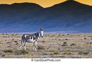Donkey in the Nevada desert at sunset
