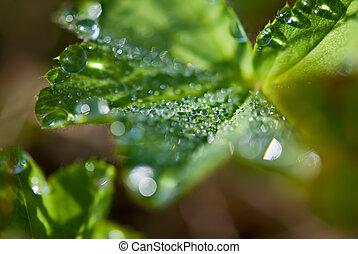 Macro of morning dew on fresh leaf