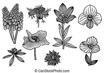 set of flowers - set of the wild flowers. Vector...