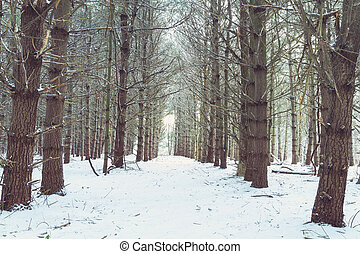 Winter Pathway Through The Woods - A winter scene with a...