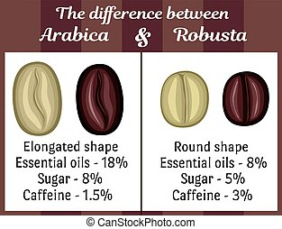 The difference between Arabica and Robusta - The visual...