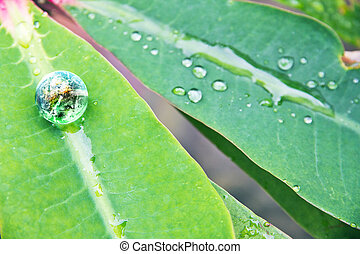 Environment Conservative concept - abstract image of small...