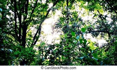 Sun shining through vibrant bright lush green foliage of...