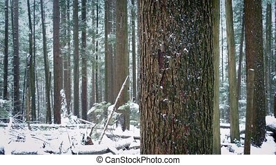 Moving Past Tree Trunk In Snowfall - Dolly shot moving...