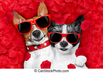 valentines couple of dogs in love - couple of two dogs lying...
