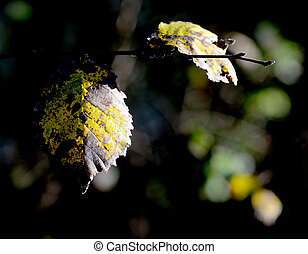 Colorful autumn leaves on a branch about to fall
