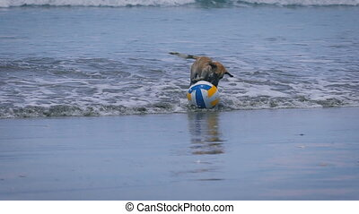 Happy wet puppy jumping on the seashore and playing with...