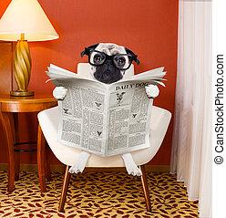 Zeitung, Daheim, lesende, hund