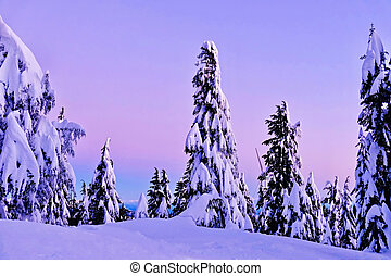 Snowy trees in sunset.