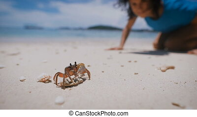 Small crab stands on a rock on a sandy beach. Girl looking...