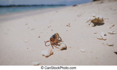 The island of Bali. Beach. Arthropods. Underwater and marine...