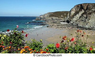 Trevaunance Cove beach flowers - Trevaunance Cove beach and...