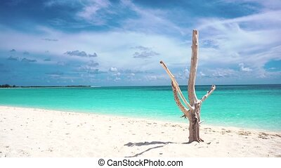 Dry tree on the beach, Cayo Largo. Azure water and white...