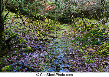 Waterlogged path in wood, Dartmoor - Path through forest...
