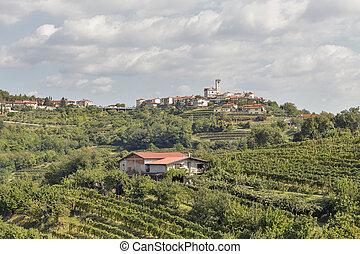 Picturesque rural mediterranean landscape with vineyards