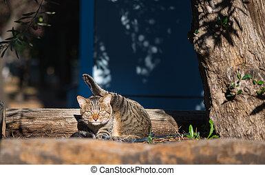 The extraordinary ninja cat - Funny cat. The extraordinary...